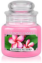 """Profumi e cosmetici Candela profumata """"Plumeria in fiore"""" (in vetro) - Country Candle Blooming Plumeria"""