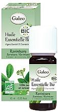 Profumi e cosmetici Olio essenziale di ravintsara - Galeo Organic Essential Oil Ravintsara